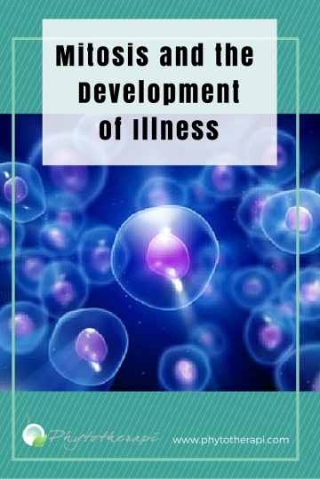 Mitosis and the development of illness (1)