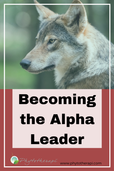 Alpha Leader Blog Cover