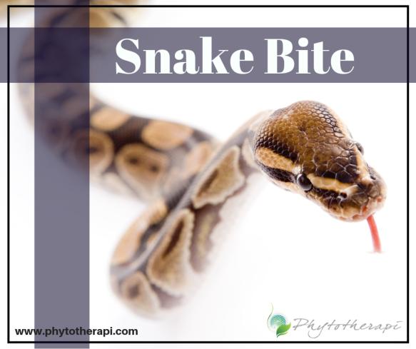 Snake Bite.png